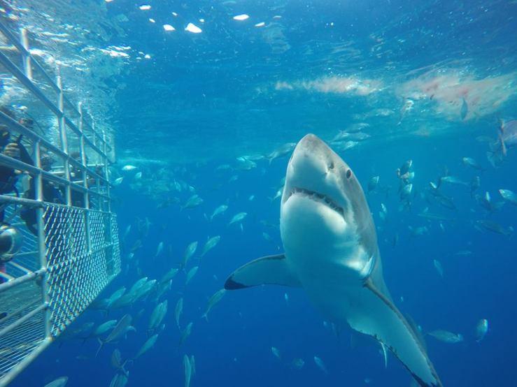 shark-diving-adventure-holidays