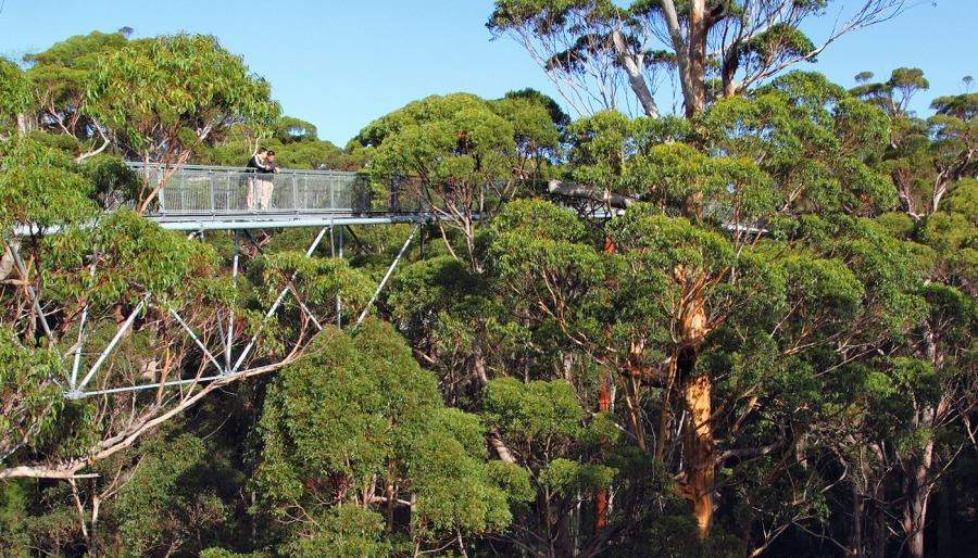 treetops-beautiful-accommodation
