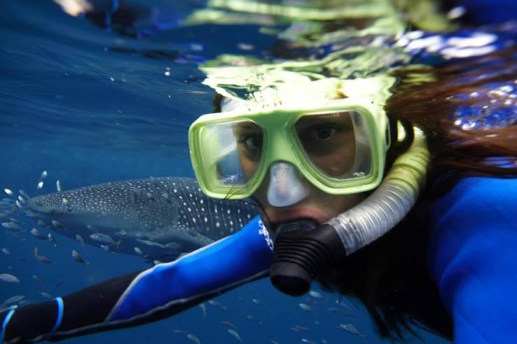 whale-shark-swimming-adventure-holidays