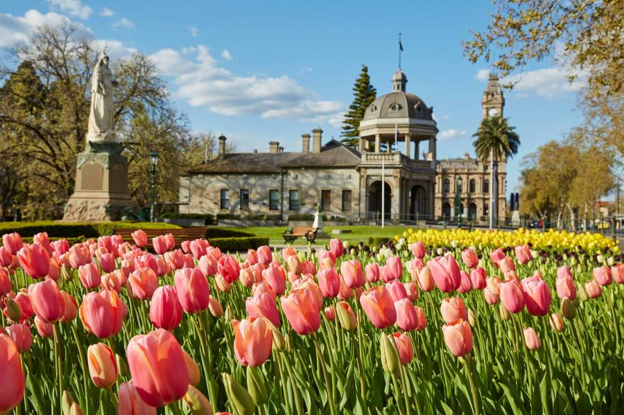 bendigo-tulips-regional-events-guide