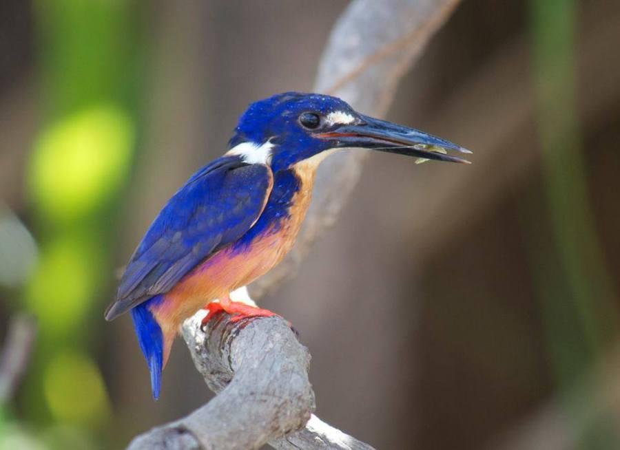 kakadu-national-park-bird-week-regional-events-guide